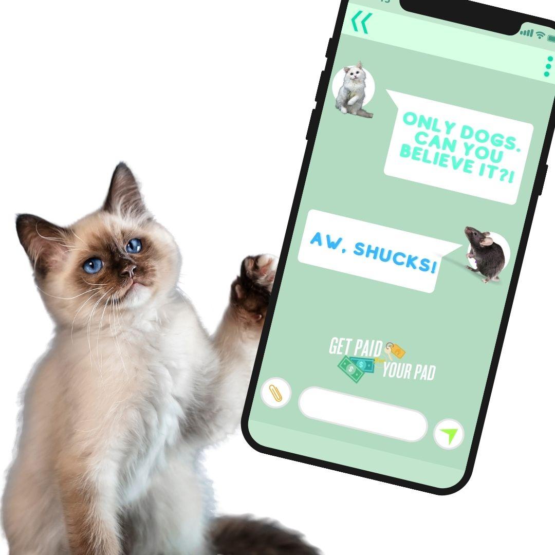 airbnb pet friendly cat